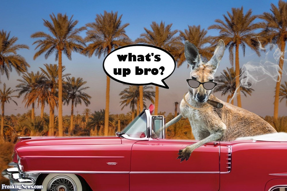 Kangaroo-Driving-a-Car-116879.jpg