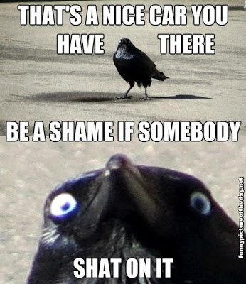 That-Is-A-Nice-Car-You-Have-There-Funny-Bird-s**t-On-It.jpg