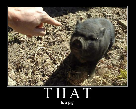 that_is_a_pig.jpg