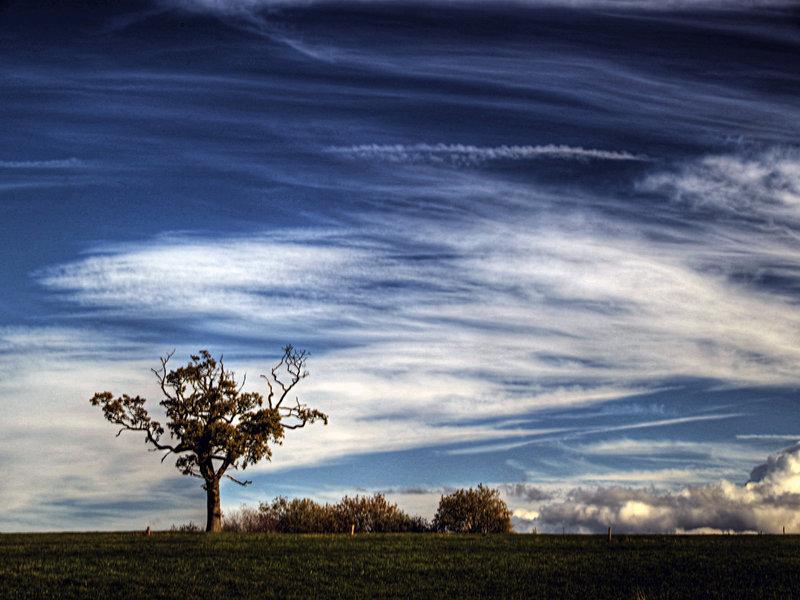 Tree_III_by_StuMac1985.jpg